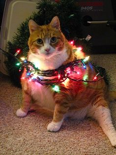 """""""I swear, I wasn't playing with the Christmas tree again!"""""""