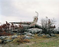 Košute, Yugoslavia.  Looks like the locals wanted to forget what this monument was built to remember.