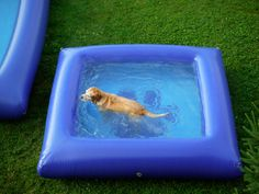 "The Ultimate Dog Pool. An inflatable pool designed for dogs, made of sturdy river raft material. Available in different sizes: 12 feet x 8 feet x 20"" deep (rectangle) , or 8 feet x 8 feet x 18"" deep (square). So fun!!!"