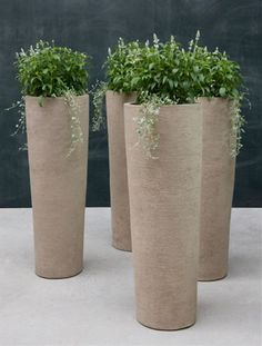 Amazing Ceramic Planter Design to Make Perfect Fresh Ornamental Plants : Simple Tube Ceramic Planter Design Fresh Small Ornamental Plants