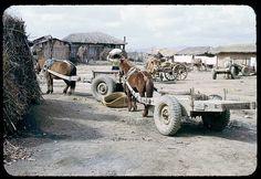 Horses pulling trailers on K6