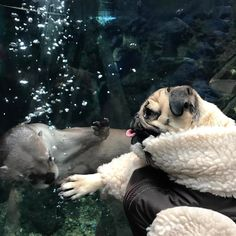"""108.8k Likes, 845 Comments - Doug The Pug (@itsdougthepug) on Instagram: """"""""When u and ur friend try to high five and miss"""" -Doug"""""""