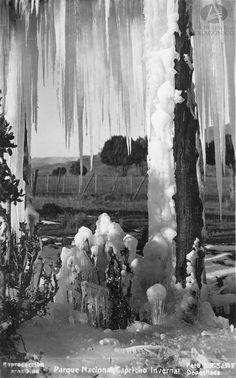 Capricho invernal, Parque Nacional, Autor: Bruno Ricardo Sálamon, Ca. 1940 (Colección Alcoba Pitt en Archivo Visual Patagónico)