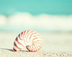 "Beach Photography - nautilus shell seashell home decor seashore wall art shore cottage aqua teal turquoise - 8x10 Photograph, ""Nautilus"". $30.00, via Etsy."