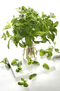 Mint Leaves by The Beautiful Blurs Spices And Herbs, Fresh Herbs, Fruit And Veg, Fresh Fruit, Fresh Mint, Mint Plants, Plant Aesthetic, Aesthetic Green, O Gas