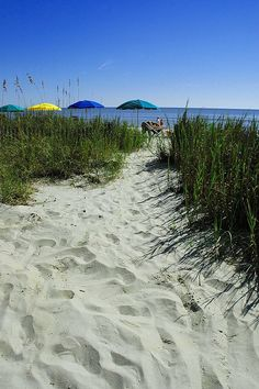 Myrtle Beach, South Carolina…what a great relaxing vacation. The sound of the ocean coming in, immediately calms me down. Vacation Destinations, Dream Vacations, Vacation Spots, Myrtle Beach Vacation, Myrtle Beach Sc, Wonderful Places, Beautiful Places, South Carolina Homes, I Love The Beach