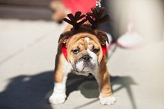 Santa Paws | Flickr - Photo Sharing!