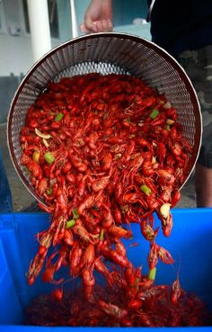 New Orleans Boiled Crawfish. When I get to Louisiana, were going to town on the crawfish! #monogramsvacations