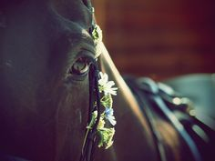 Flower in the Bridle