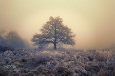 A tree in fog by ganimedes69