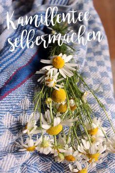 Kamillentee selbermachen, Heilkräuter Tee - Anleitung