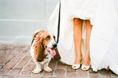 You are a kick-ass maid of honor. | 38 Signs You're A Basset Hound