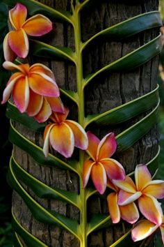 frangipani and palm fronds...