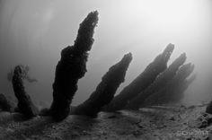 OVM1 wreck, Oostvoornsemeer