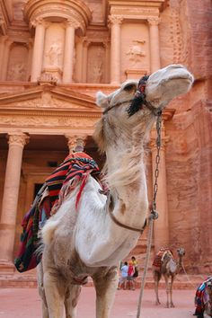 Petra tours from Hurghada, Visit Petra Jordan sightseeing from Hurghada Egypt for one day trip with us. Oh The Places You'll Go, Places To Travel, Places To Visit, Petra Tours, Dubai, Day Trip, Wonders Of The World, Jordans, Wildlife