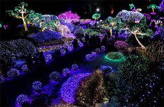 Christmas lights - Garden of Calm in Gapyeong, South Korea