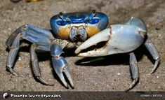 - - Planeta Invertebrados Brasil -