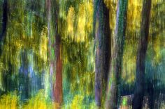 https://flic.kr/p/DBQmML   Forest Of Dreams   This is my forest....And I will not share it with anyone,anymore....I have marked every tree with a…