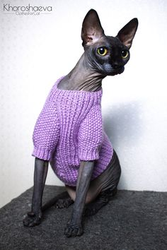 Cat Sweater With Buttons Size M Knitting Pattern, Sphynx Pullover Knitting Pattern PDF, Pet Lilac Knitting Sweater Pattern Crochet Bat, Crochet Pattern, Knitted Cat, Sphynx, Hairless Cats, Cat Sweaters, Sweater Knitting Patterns, Sweater Design, Etsy Handmade