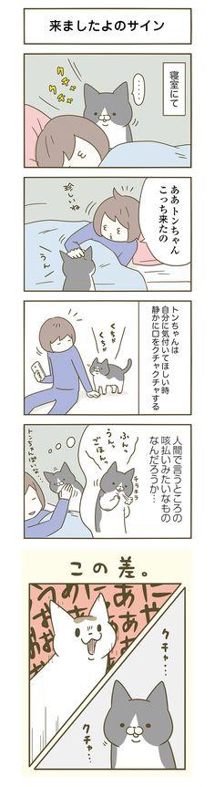 【期間限定!毎日連載】「うちの猫がまた変なことしてる。」第10話
