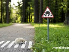 This is a clear sign that requires low cognitive effort. It clearly depicts a hedgehog crossing zone.
