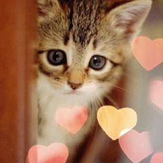 cat. ?の画像 プリ画像