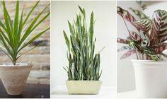 171 fantastiche immagini in piante da appartamento. su pinterest nel