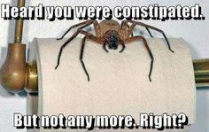 Spiders = my worst fear!!!!  I think this could work for me.  Only problem, I'd fall off the toilet.