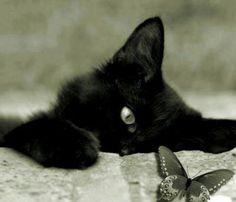 Tayari e o seu gato;-)