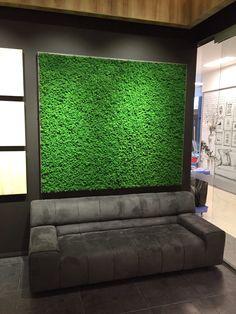 Naturalny mech marki Moss Trend - PLN Design