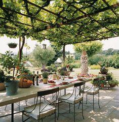 Planted pergola above alfresco dining