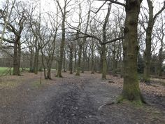 Belfairs Woods