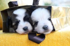 https://flic.kr/p/4czgux   cip&ciop junior   Due dei 7 cuccioli di Stella On explore Dec 10, 2007 #154