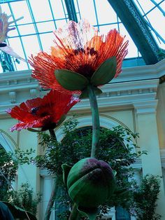 Blooming Glass Poppies | Flickr - Photo Sharing! Dale Chihuly