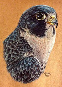 Peregrine Falcon by KristynJanelle on DeviantArt