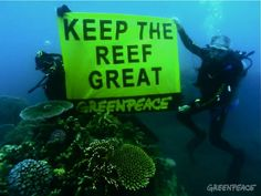 Underwater Pictures Great Barrier Reef | ... Great Barrier Reef today when he joined Greenpeace divers in an
