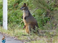 Camino a Eagle Hawk Lookout (Australia)