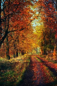 Autumn by koko-stock Fall Pictures, Fall Photos, Beautiful Places, Beautiful Pictures, October Country, Autumn Scenes, Autumn Aesthetic, Flowers Nature, Image Hd