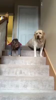 21 Puppies And Dogs Losing The Battle Against Stairs – Before we make fun of these dogs for not knowing how to use stairs, let's remember that they have twice… Cute Funny Animals, Cute Baby Animals, Funny Cute, Funny Dogs, Animals And Pets, Fluffy Animals, Cute Puppies, Cute Dogs, Dogs And Puppies