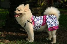 Sewing patterns for dog toys, clothes etc.