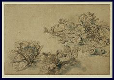 Abraham Bloemaert; (Dutch, c.1605 - 1614); Studies of a Marrow Plant and Cabbages; Pen and brown ink, blue wash and heightened with white bodycolor (Getty Museum)