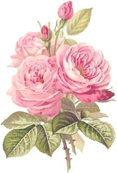 ThE BesT ReDouTe CaBbaGe RoSeS ShaBby WaTerSLiDe DeCALs *ChiC*