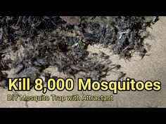 The best DIY projects & DIY ideas and tutorials: sewing, paper craft, DIY. Mosquito trap DIY mosquito kill reduce ZIKA DENGUE MALARIA MaxxAir Fan Video Description I trapped mosquitoes in two nights using our