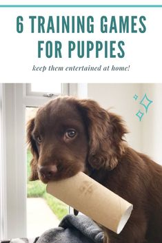 How Dogs And Puppies Learn, A Guide To Dog Training – Puppy Training Games For Puppies, Puppies Tips, Dog Games, Dogs And Puppies, Brain Games For Dogs, Bulldog Puppies, Service Dog Training, Puppy Training Tips, Training Your Puppy