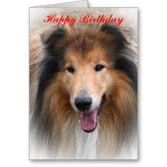Rough collie dog photo happy birthday card greeting card.  This beautiful image will please any Collie dog lover