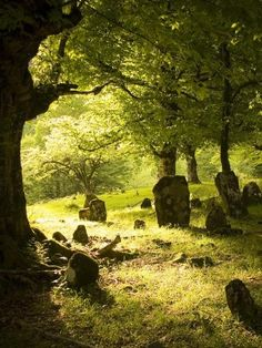 Beautiful light in an old graveyard……THE SUN SHINES THRU THIS SECTION EVERY DAY……..ccp