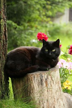 I love black cats. It looks like this one is wearing a flower.