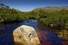palmiet river - Google Search Rivers, South Africa, Westerns, Landscapes, Google Search, Places, Water, Travel, Outdoor