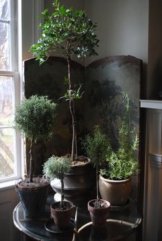 Indoor plants grouped on a table