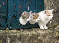 "One little kitty, two little kitties, three little/""oops"" ------Cats of Istanbul"